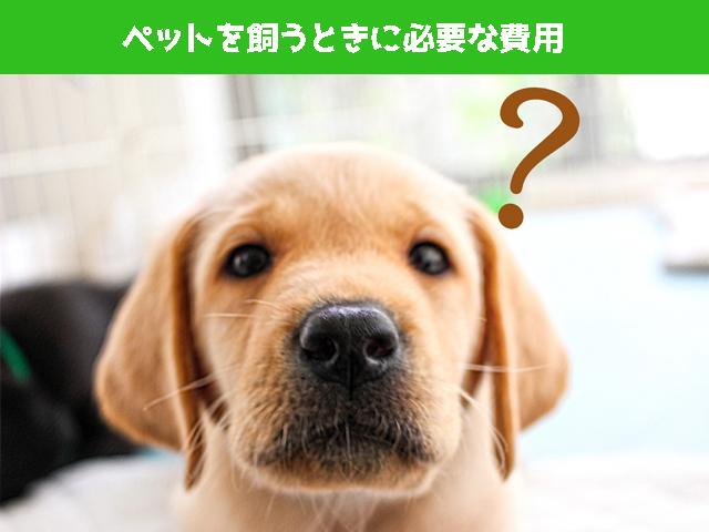 ペットを買うときに必要な費用は?