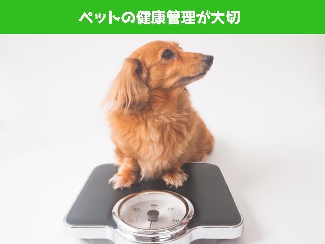 ペットの健康管理が大事
