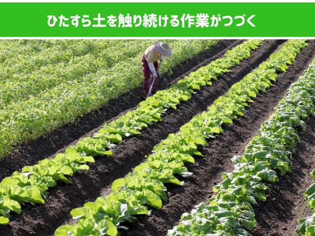 農家のバイトのきつさ
