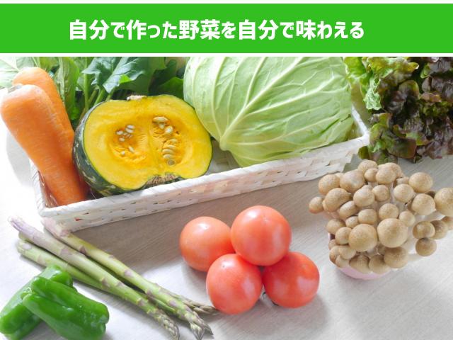 自分の野菜を食べられる